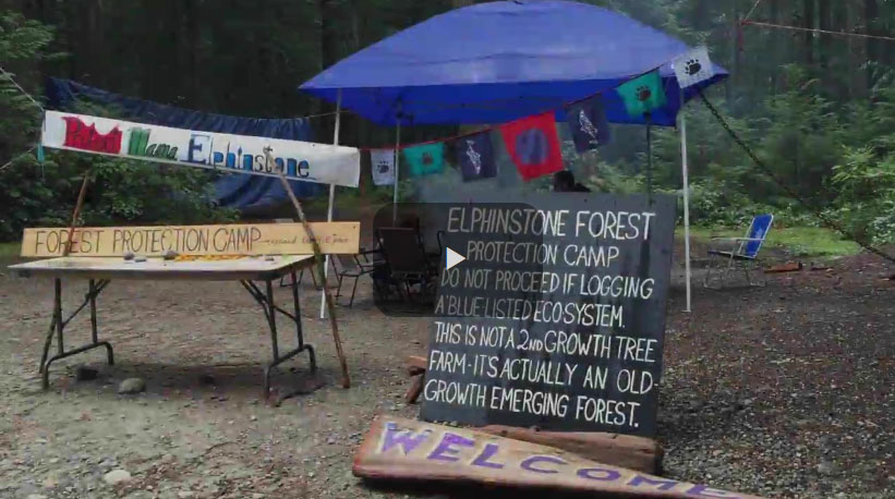 Sunshine Coast logging protest heats up with flaming blockade